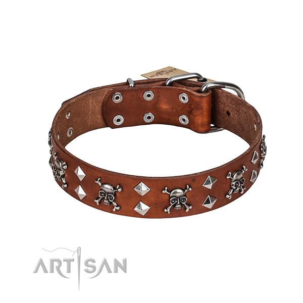 Walking dog collar of durable full grain natural leather with studs