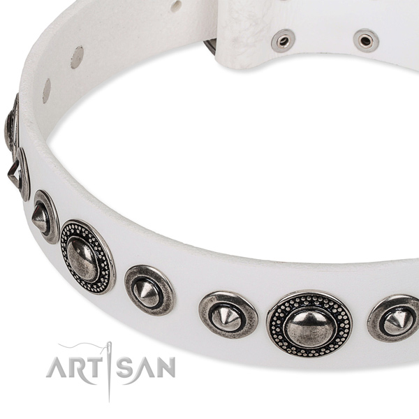 Walking embellished dog collar of quality full grain leather