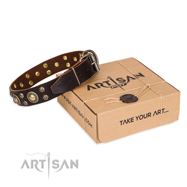 Everyday walking dog collar of finest quality leather with decorations