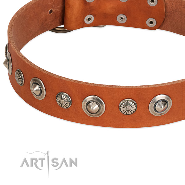 Natural leather collar with corrosion resistant fittings for your stylish dog