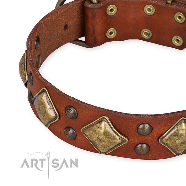 Full grain leather collar with reliable fittings for your attractive canine