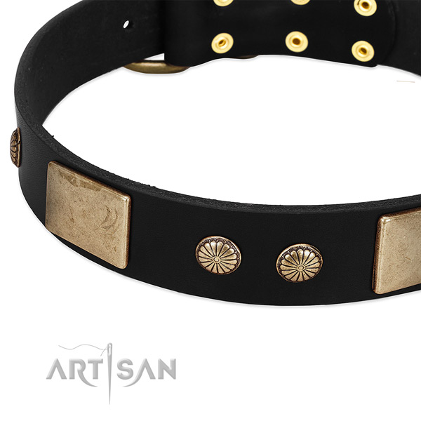 Leather dog collar with studs for daily use