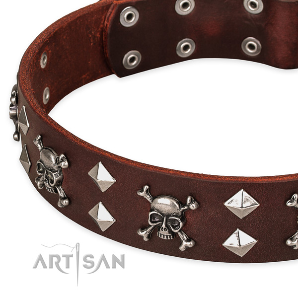 Everyday walking decorated dog collar of top quality full grain leather