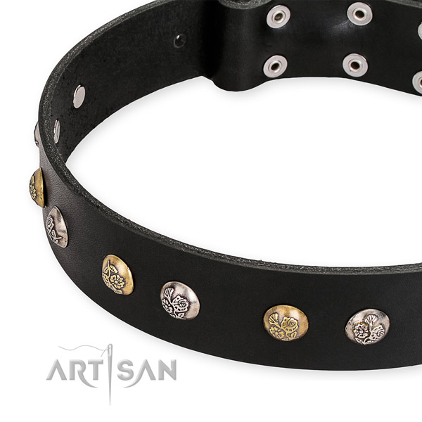 Full grain natural leather dog collar with remarkable rust resistant decorations