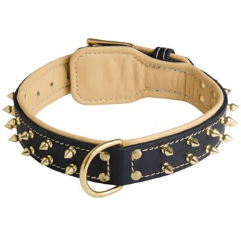 Leather Mastiff Collar Spiked Padded with Nappa Leather Adjustable