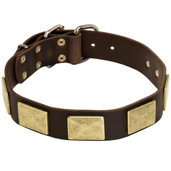 Leather Mastiff Collar with Fashionable Studs