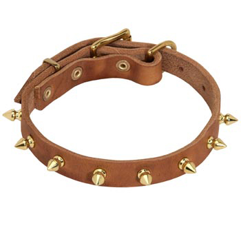 Designer Leather Collar for Mastiff