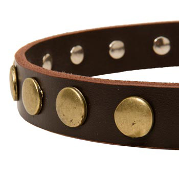 Designer Leather Dog Collar for Walking Mastiff