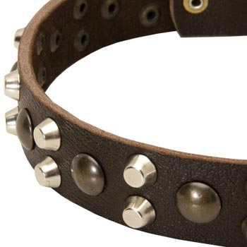 Leather Mastiff Collar with Hand Set Studs