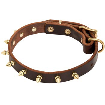 Leather Mastiff Collar with Brass Spikes