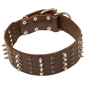 Leather Collar for Mastiff Walking in Style