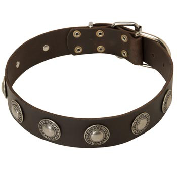 Training Leather   Mastiff Collar for Stylish Dogs