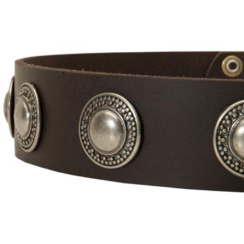 Leather Dog Collar with Conchos for   Mastiff