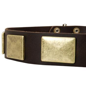 Leather Dog Collar with Massive Brass Plates for Mastiff