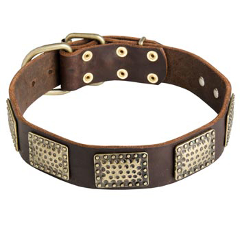 Leather Dog Collar with Vintage Plates