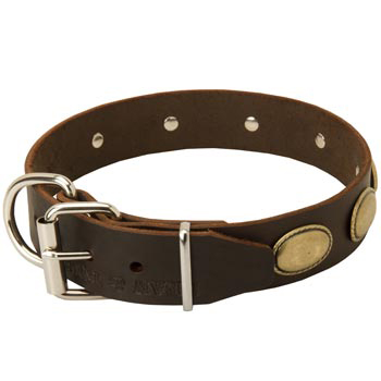 Fashionable Leather Collar for Mastiff