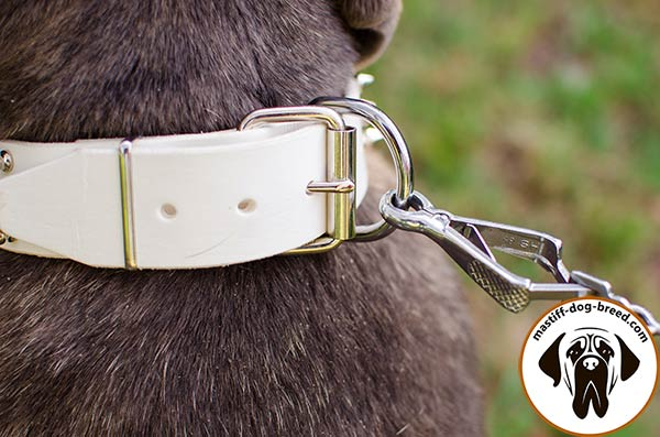 Leather Mastino Napoletano collar with reliable nickel plated buckle and D-ring