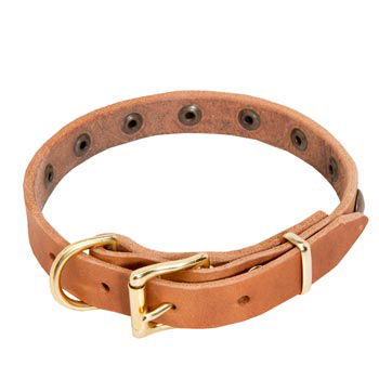 Mastiff Leather Collar with Studs