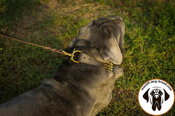 High quality leather canine collar for Mastino Napoletano with brass hardware
