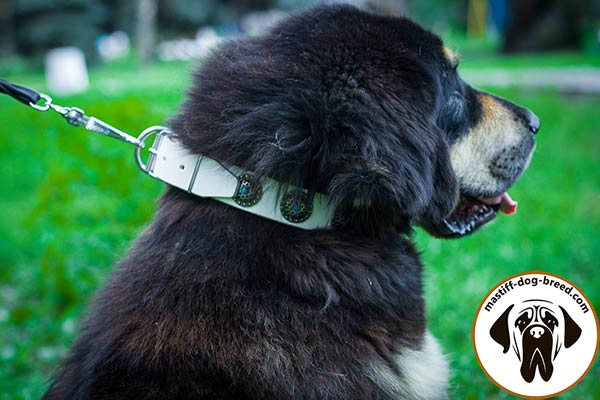 Fashion leather dog collar for Mastiff with conchos