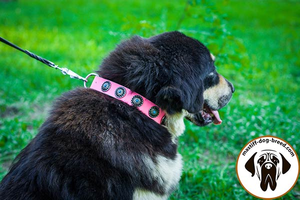 Pink leather dog collar for Mastiff with blue stones