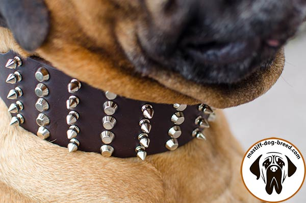 Leather dog collar for Bullmastiff with spikes and pyramids