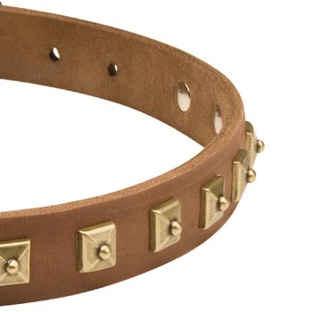 Leather Dog Collar for Mastiff with Studs