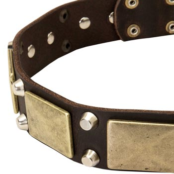 Leather Mastiff Collar with Nickel Studs