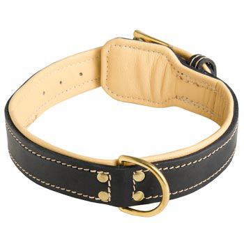 Leather Dog Collar Padded for Mastiff Off Leash Training