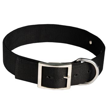 Mastiff Training Collar with ID Tag