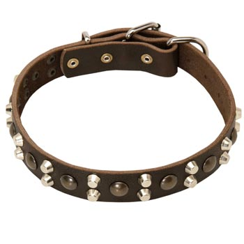 Leather Collar for Mastiff Stylish Walks