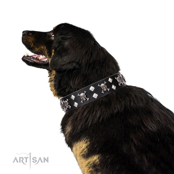 Comfy wearing decorated dog collar of quality genuine leather