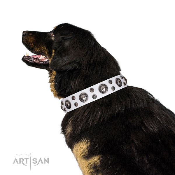 Daily walking studded dog collar of top quality natural leather