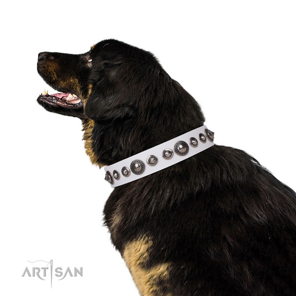Exceptional decorated leather dog collar for comfy wearing