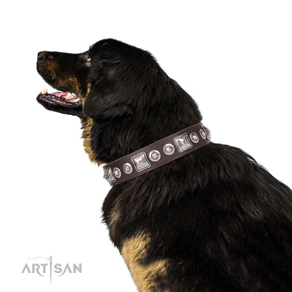 Inimitable embellished leather dog collar for daily walking
