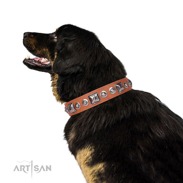 Stylish embellished natural leather dog collar for fancy walking