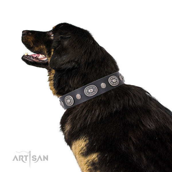 Corrosion resistant buckle and D-ring on full grain leather dog collar for stylish walks