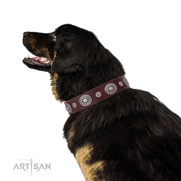 Rust resistant buckle and D-ring on genuine leather dog collar for walking in style