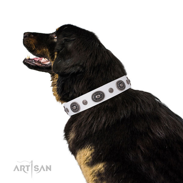 Full grain leather dog collar with reliable buckle and D-ring for daily walking