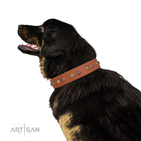 Leather dog collar with corrosion proof buckle and D-ring for everyday walking