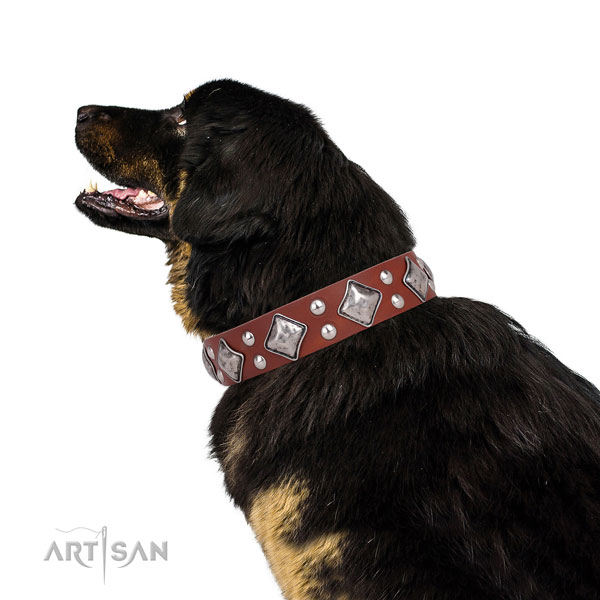 Fancy walking adorned dog collar made of high quality genuine leather