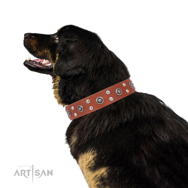 Easy wearing dog collar with stylish adornments