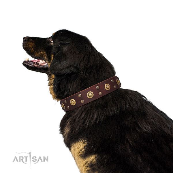 Everyday walking dog collar with exceptional embellishments
