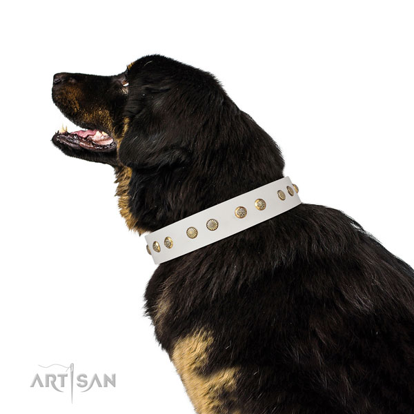 Stylish studs on daily use full grain leather dog collar