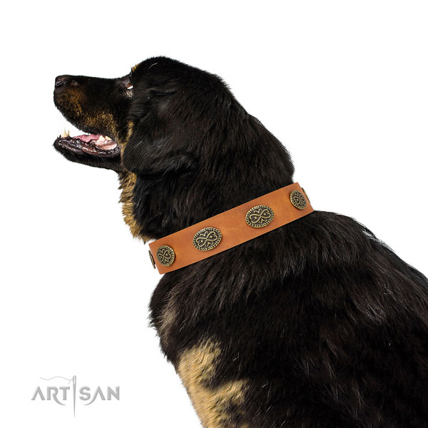 Amazing adornments on easy wearing natural genuine leather dog collar