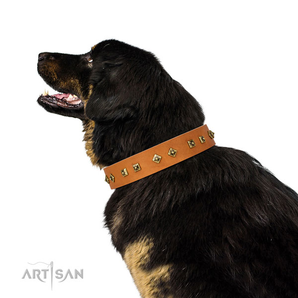 Exceptional studs on daily walking dog collar