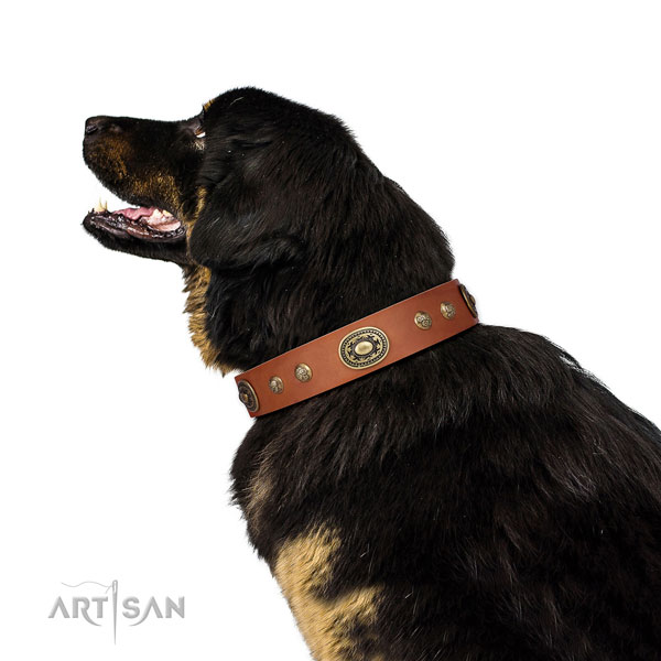 Top notch adornments on easy wearing dog collar