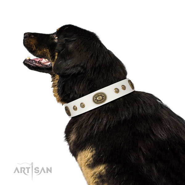 Designer studs on handy use dog collar