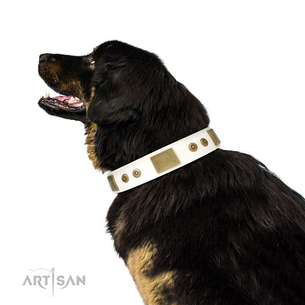 Top rate everyday walking dog collar of natural leather