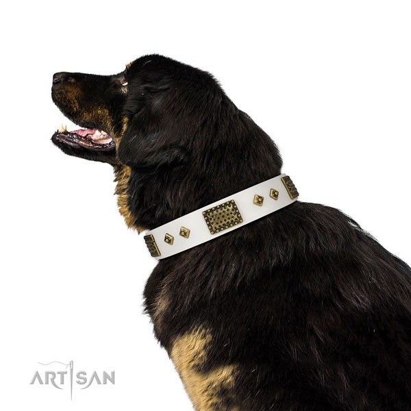 Daily use dog collar of natural leather with significant studs